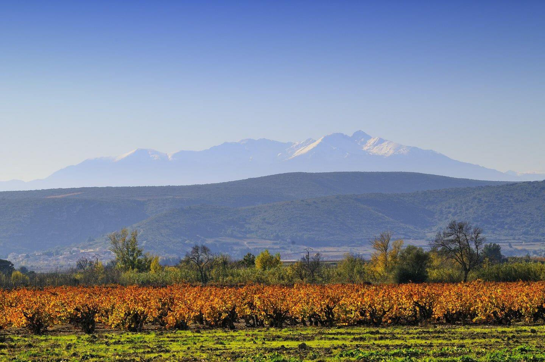 Le canigou e le vigne di Corbières